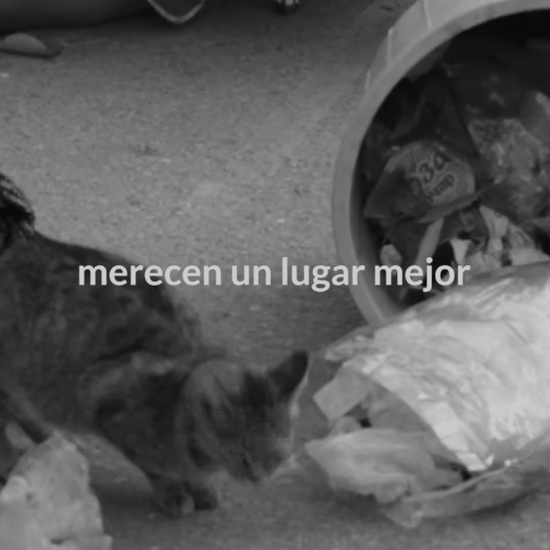 Campaña de Marketing de Guerrilla para Defensa Felina - Parnaso
